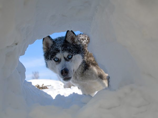 Winter Insurance Claim Animal problem